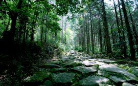 日本を旅する[三重]熊野古道
